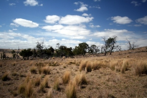 Does this grassland invoke the same feelings you would have in a forest? What if you knew it was an endangered grassland?